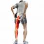 """坐骨神経痛の治療法 """"お尻から脚が痛い""""から元気に歩けるようになるまで!"""